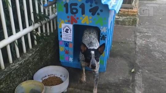 Projeto constrói casinhas para cachorros abandonados em Cachoeirinha