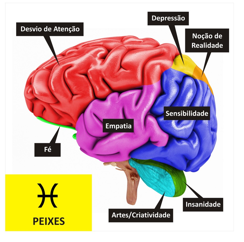Cérebro de Peixes  (Foto: TV Globo )