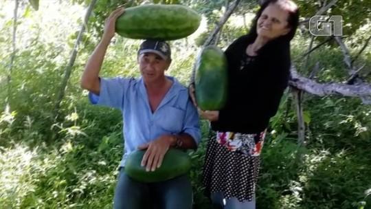 Em fotos, agricultores potiguares mostram área de plantação antes e depois das chuvas