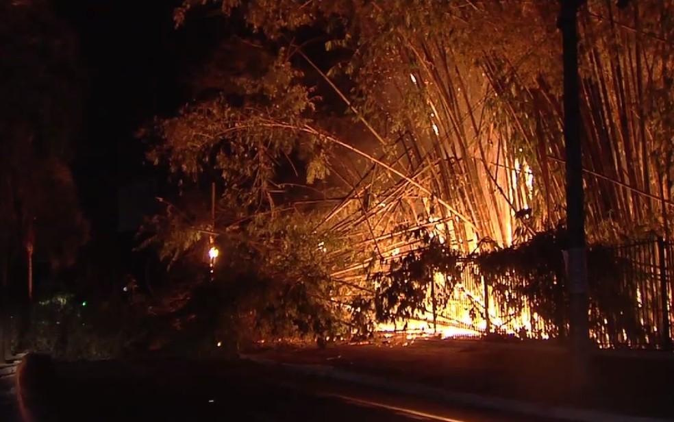 Parque Areião é alvo de incêndios em Goiânia (Foto: Reprodução/TV Anhanguera)