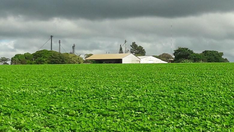 agricultura-soja-lavoura-fiorese (Foto: Raphael Salomão/Ed. Globo)
