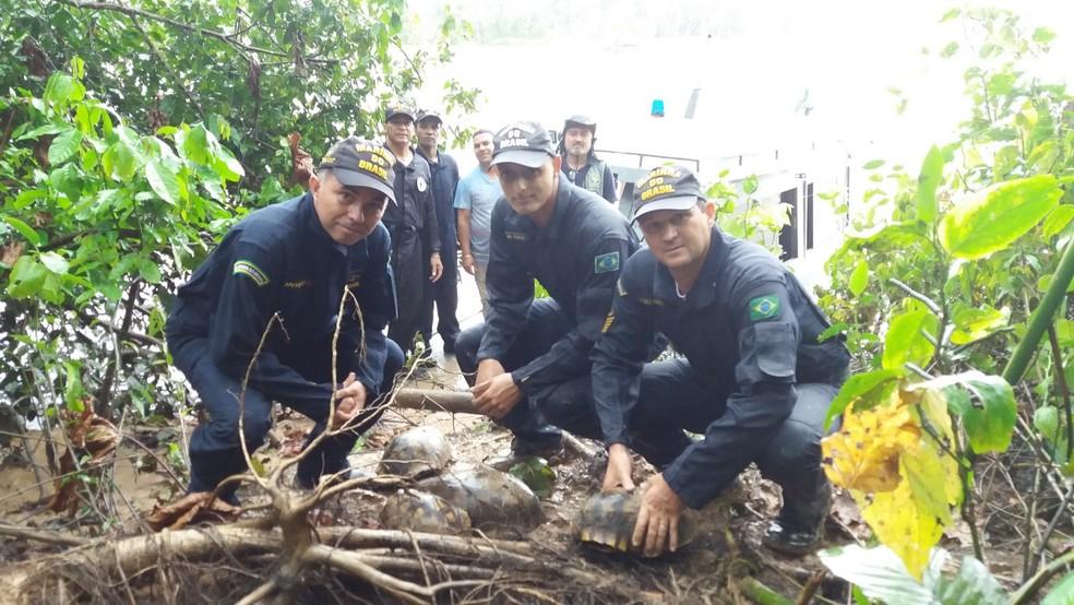 Jabutis foram liberados pelo Imac e homens da Marinha  — Foto: Divulgação/Imac