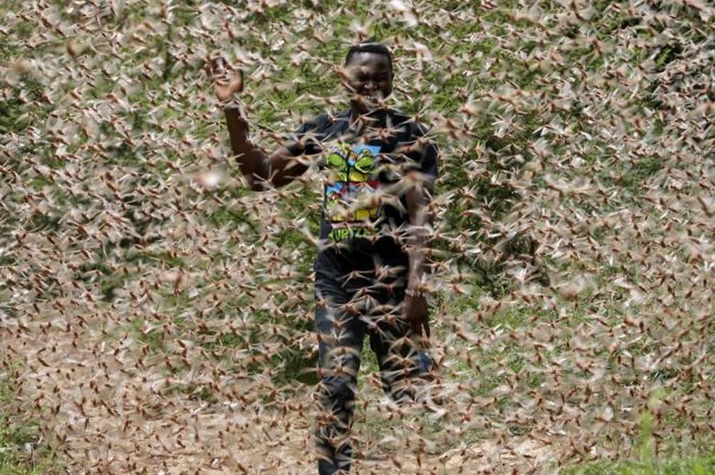 Gafanhotos da espécie Schistocerca cancellata passaram por um processo natural no qual deixam de ser solitários e passam a viver juntos. Em maio e junho, consumiram plantações no Paraguai e na Argentina. Agora, há expectativa de que eles possam voar para o Brasil ou o Uruguai. — Foto: EPA