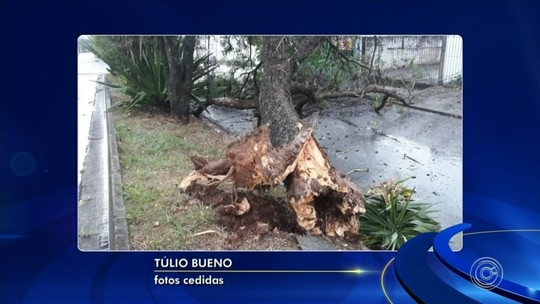 Chuva forte derruba árvore em Sorocaba
