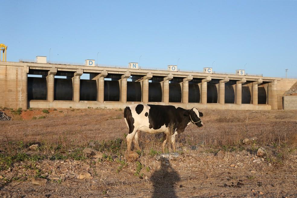Castanhão, maior açude do país, tem apenas 3% da capacidade de armazenamento  (Foto: Kid Júnior/Agência Diário)