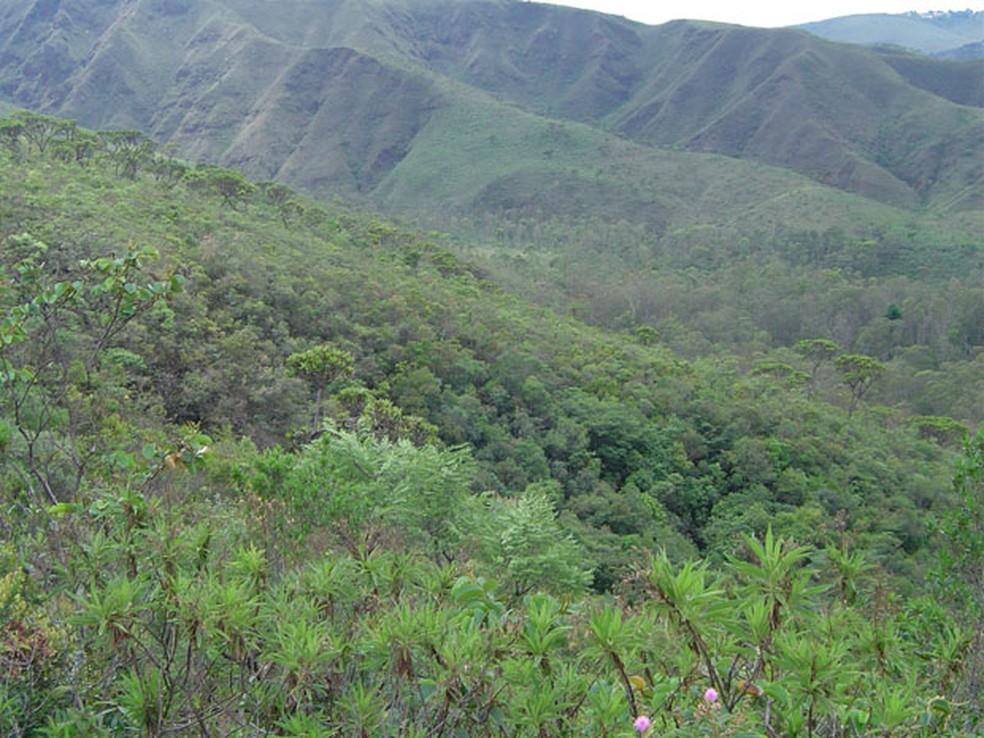 Vegetação de Cerrado no Parque Estadual Serra do Rola-Moça. — Foto: Divulgação