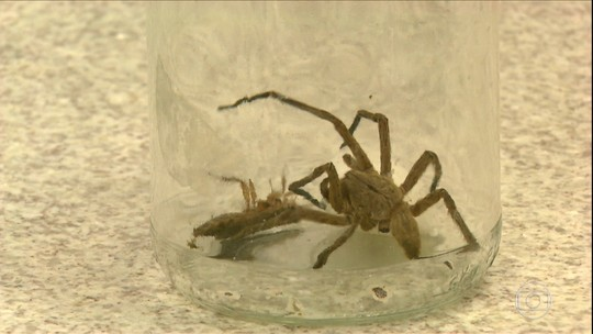 Conheça a aranha-de-jardim