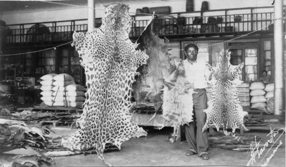 Casa de comércio de peles em Manaus, que exportava produtos para outras partes do mundo (Foto: IBGE)
