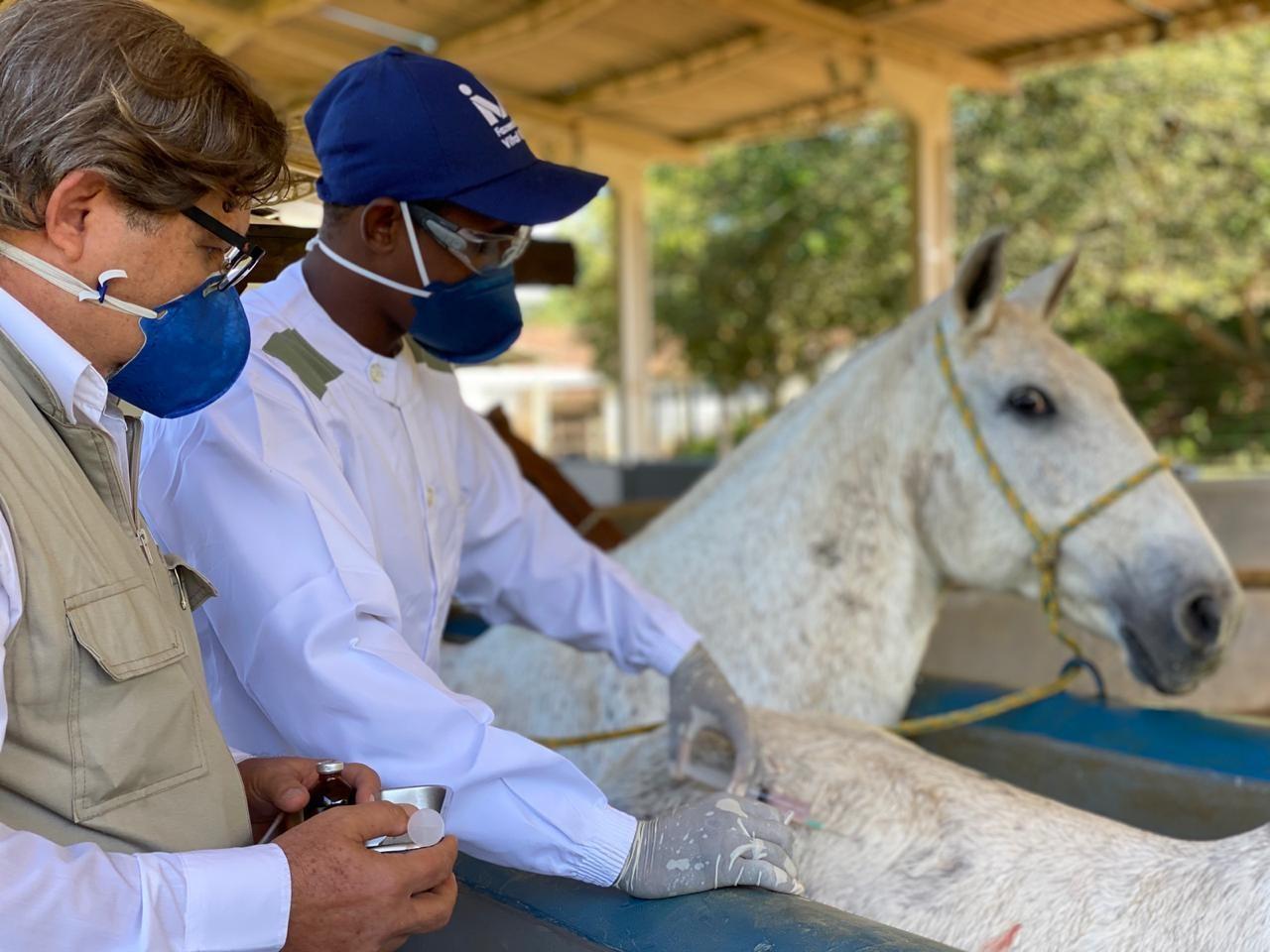Brasileiros descobrem que anticorpo de cavalos contra a Covid é até 50 vezes mais potente