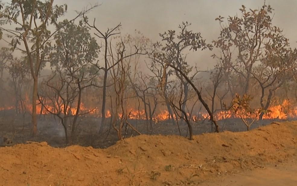 Fogo atinge região próxima a cachoeiras de Pirenópolis — Foto: Reprodução/TV Anhanguera