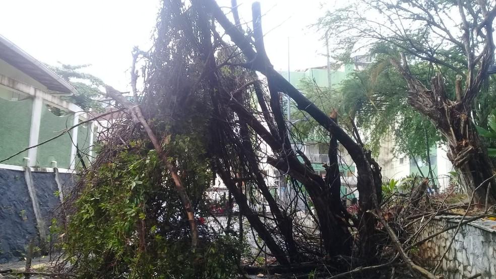 Queda ocorreu na Rua Belmonte, no Rio Vermelho, na madrugada desta quinta-feira (31). — Foto: Cid Vaz / TV Bahia