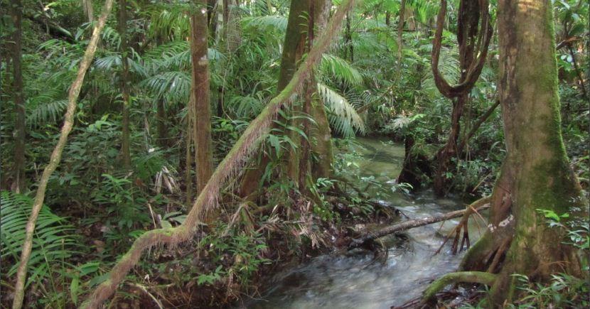 Igarapé na cidade de Paragominas, no Pará. (Foto: Rede Amazônia Sustentável)