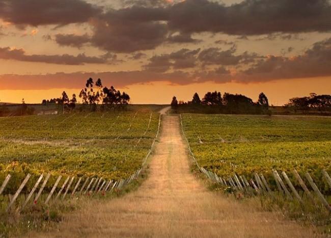 Vinhedos da Casa Valduga: dos vinhos premiados no Citadelles du Vin 2021