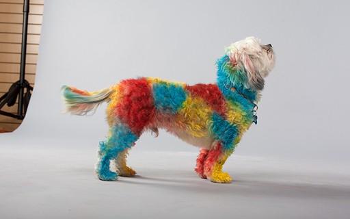 Empreendedor Cria Tinta Para Pintar Cachorros Epoca Negocios Acao