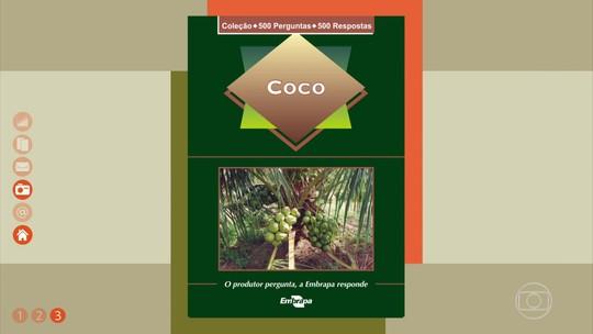Tire dúvidas sobre a produção de coco
