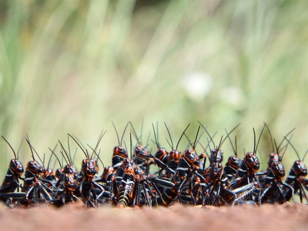 Cliques detalhados de insetos também chamam atenção entre os registros — Foto: Pedro Medeiros/VC no TG