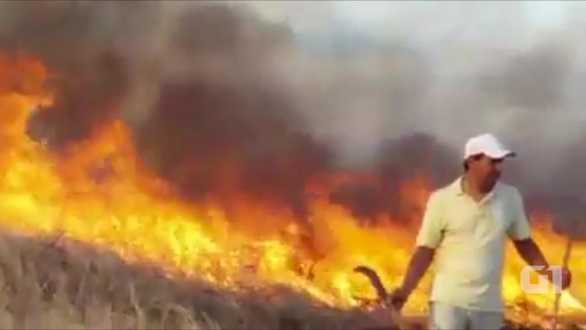 Incêndio de grandes proporções atinge área florestal em Ingazeira