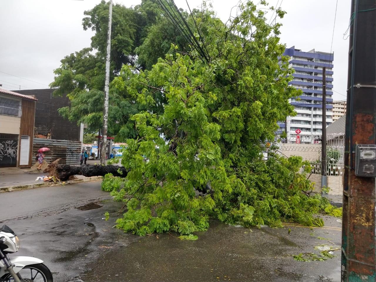 Árvore cai e bloqueia parte da Avenida Jovita Feitosa, em Fortaleza