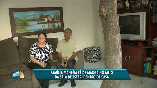 Casal constrói casa com árvore no meio da sala de estar, em Campina Grande