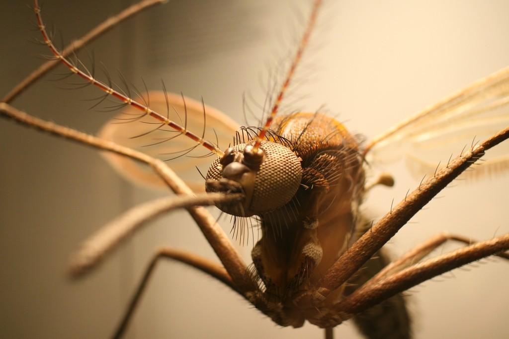 Mosquitos fêmea precisam do seu sangue para procriar (Foto: Flickr / Stefan Kellner)