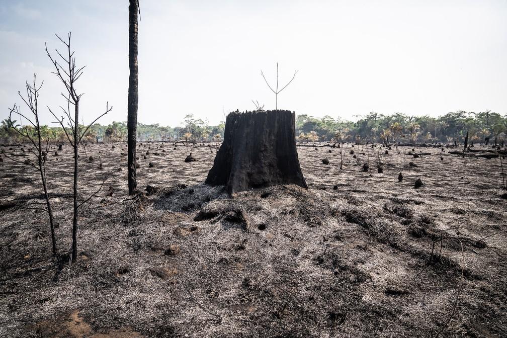 Terreno queimado em rodovia de Rondônia em 2019 — Foto: Fábio Tito/G1