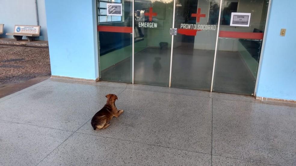 Cachorro passa noite na porta de hospital após dono ser internado em Iacanga (SP) — Foto: Sérgio da Matta/Arquivo pessoal