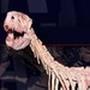 Quiz: Dinossauros Brasileiros
