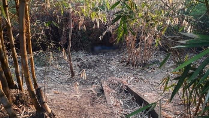 Corpo é encontrado em área de bambuzais em Marabá, no PA - Notícias - Plantão Diário