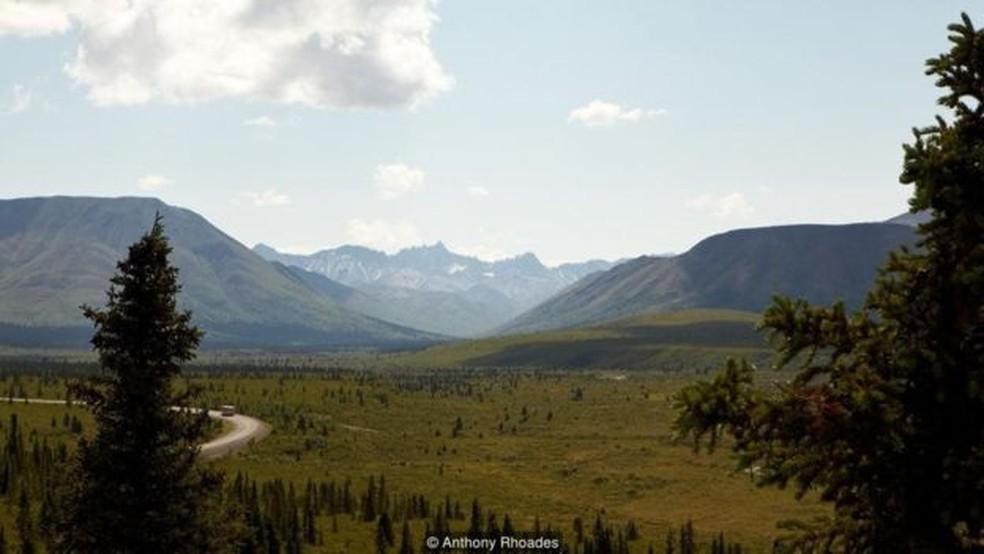 No Parque Nacional Denali, o aumento da temperatura começou a afetar a vida selvagem (Foto: Anthony Rhoades)