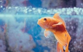 O que aprender com o cassino que foi invadido por um aquário
