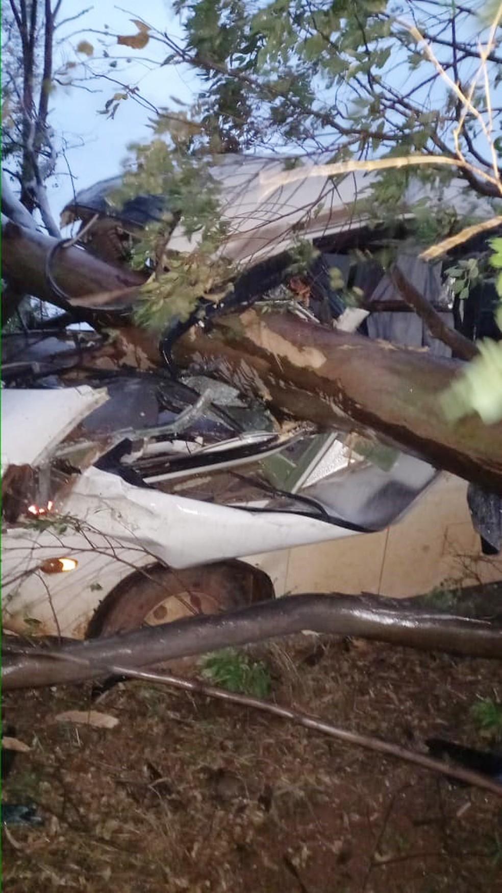 Micro-ônibus bateu em árvore caída em estrada em Teodoro Sampaio (SP) — Foto: Corpo de Bombeiros