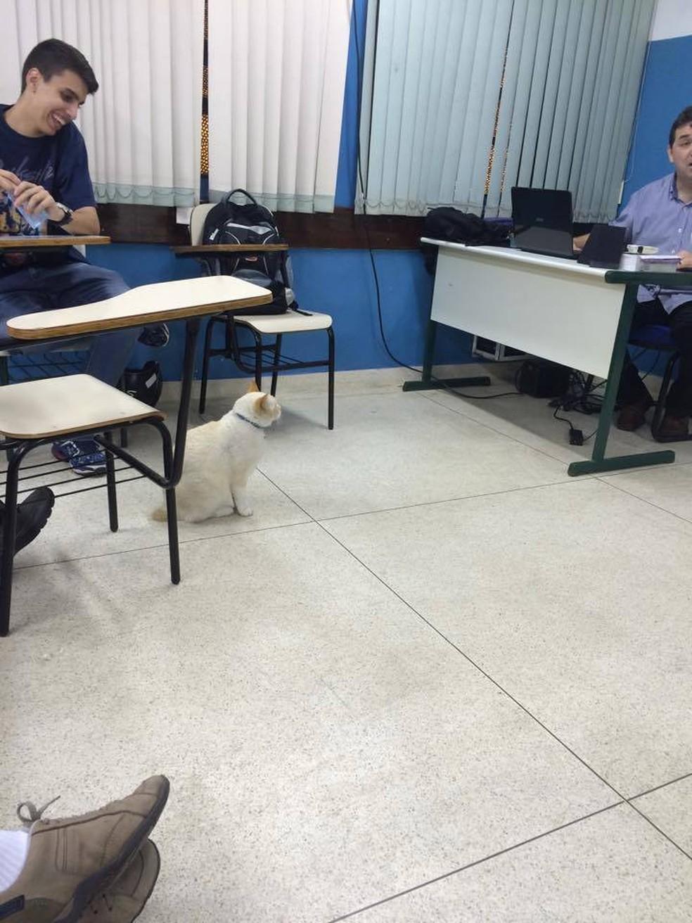 Branco frequenta as aulas da Fatec Rubens Lara há nove anos — Foto: Arquivo Pessoal