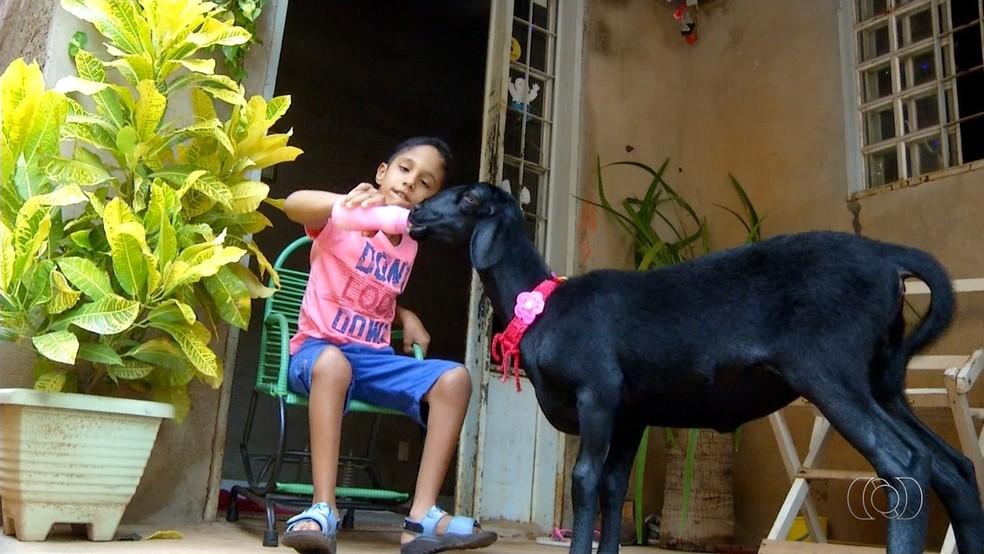 Menino com paralisia cerebral teve melhora após contato com cabra de estimação (Foto: Reprodução/TV Anhanguera)