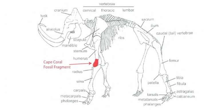Imagem mostra região do corpo a qual pertencia o osso encontrado (Foto: Reprodução/Twitter)