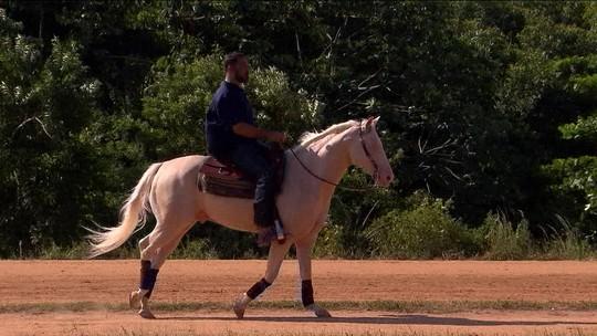 Aposentado das lutas, Minotauro divide tempo entre UFC, restaurante e treinos com cavalo