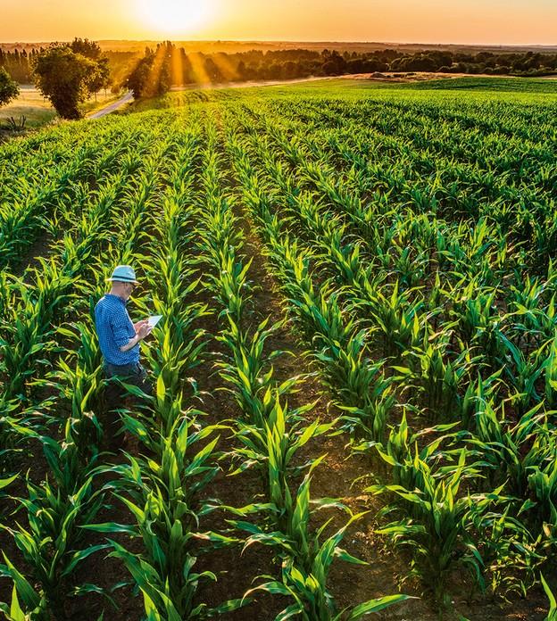 gestao-no-agro-curso-milho-tecnologia