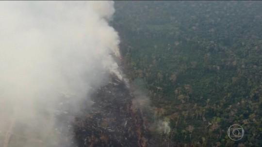 Cientista da Nasa afirma que desmatamento cresceu e árvores são queimadas após serem derrubadas