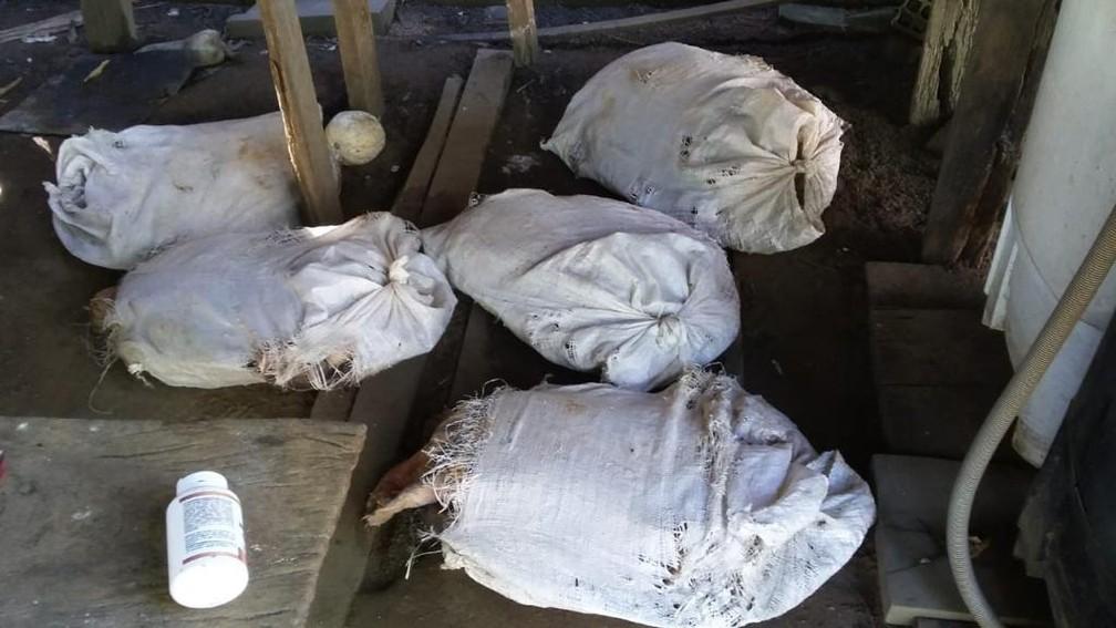 Sacos com tartarugas estavam espalhados pelo terreno em Costa Marques — Foto: Polícia Civil/Divulgação