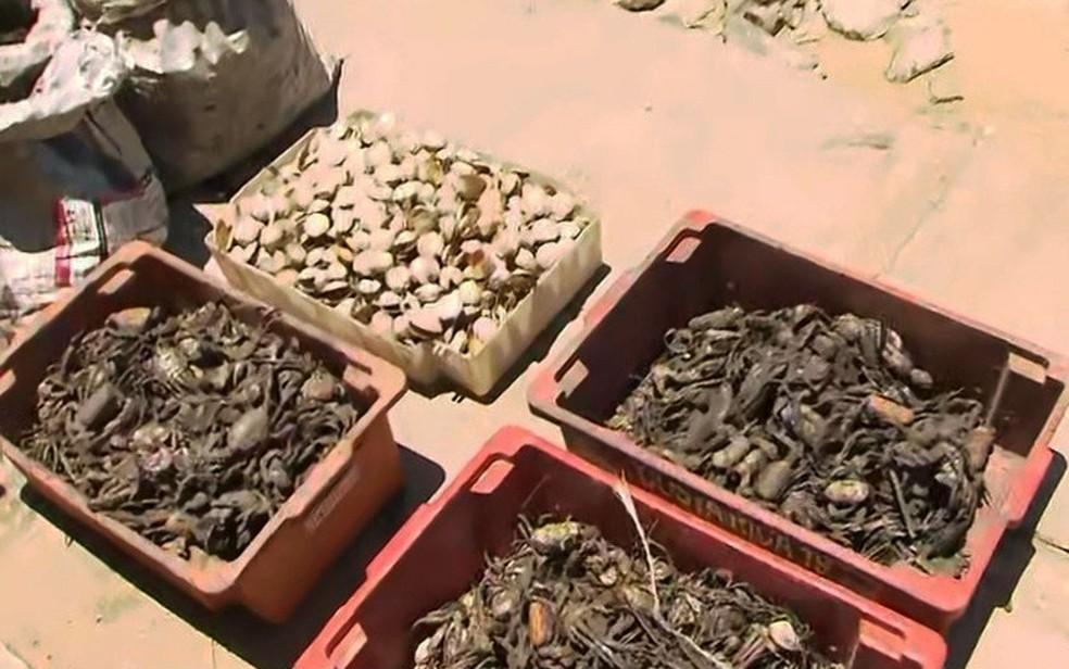 Com baixa procura de clientes por causa de óleo, peixes e mariscos ficam apodrecidos e são jogados no lixo por comerciantes na Bahia — Foto: Reprodução/TV Bahia