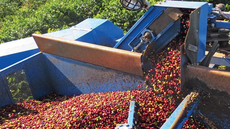 Fazenda Pinhal: Colheita de café arábica na Pinhal  (Foto: Rogerio Albuquerque)