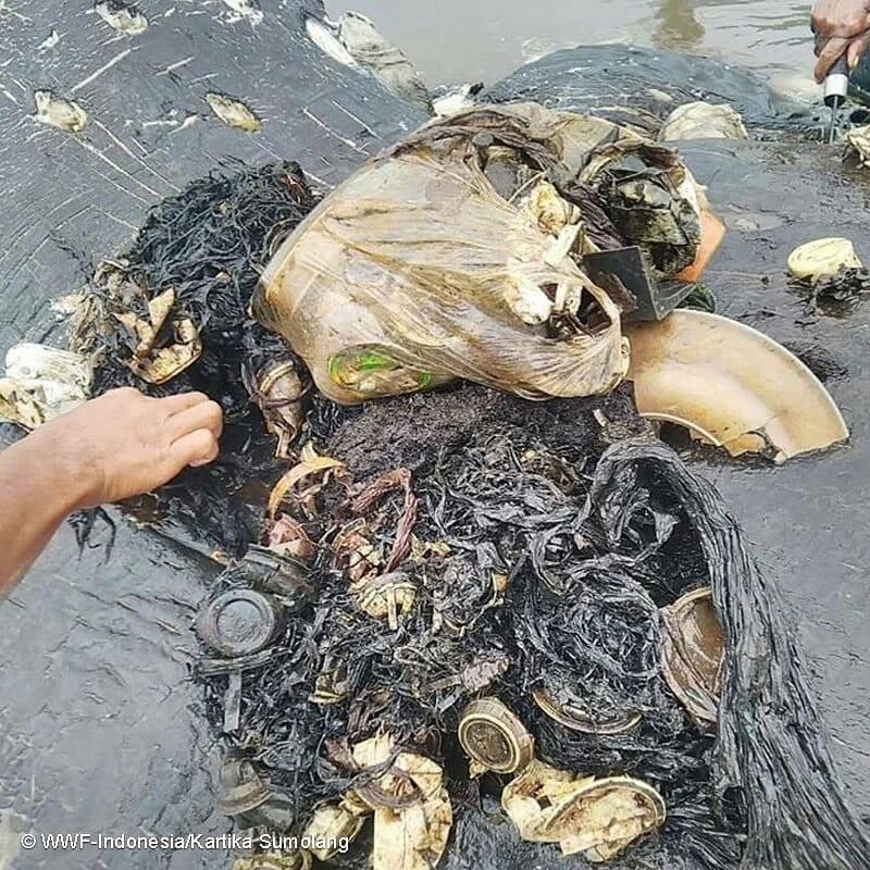 Copos, sacolas, chinelos e centenas de outros itens plásticos foram engolidos pelo cachalote (Foto: WWF-Indonesia/Kartika Sumolang)