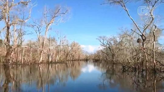 Vídeo mostra natureza morta e ribeirinhos acusam hidrelétrica