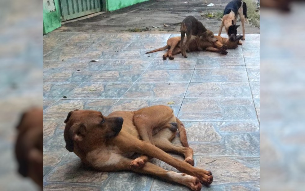 Cachorros de rua do Conjunto Vera Cruz teriam sido envenados, em Goiânia, Goiás — Foto: Reprodução/Jairo Alves Neves
