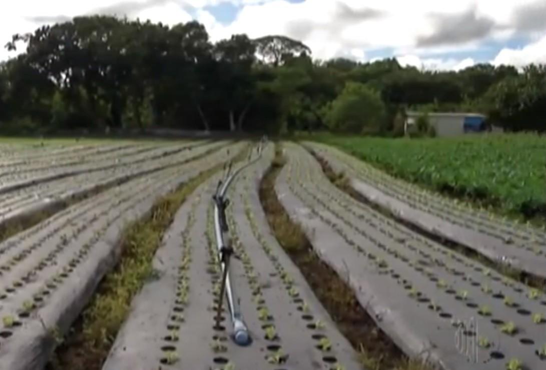 Agricultor do Alto Tietê busca utilizar técnicas que protegem o solo; conheça os métodos