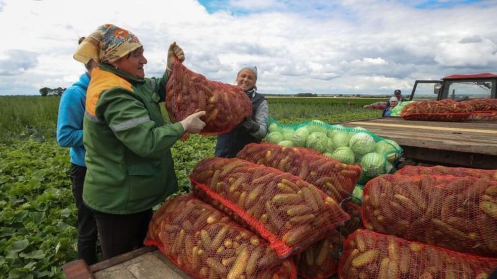 Maior parte das terras usadas para agricultura é propriedade do Estado e emprega quase 10% da população de Belarus — Foto: Getty Images/BBC