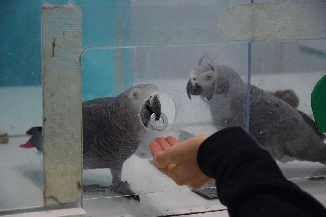 Resultado de imagem para Papagaios ajudam os colegas mesmo sem receber nada em troca, mostra estudo