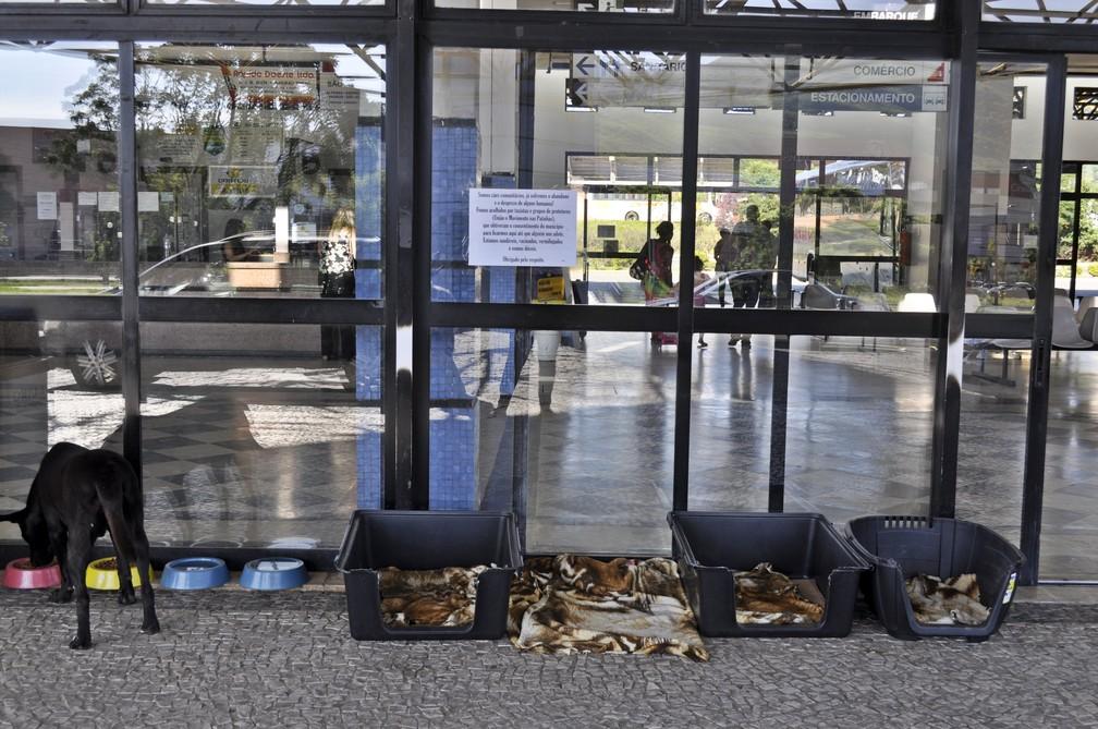 Gastos com alimentação e exames são custeados por meio de vaquinhas e rifas — Foto: Camilla Resende/G1
