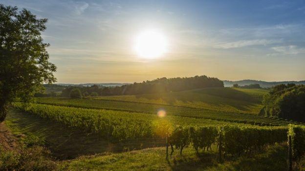 Um vinhedo em Bordeaux - o de propriedade de Le Pin ocupa apenas um acre (Foto: Getty Images)