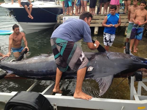Marlin azul foi pescado em Florianópolis (Fot Anselmo Prada/RBS TV)