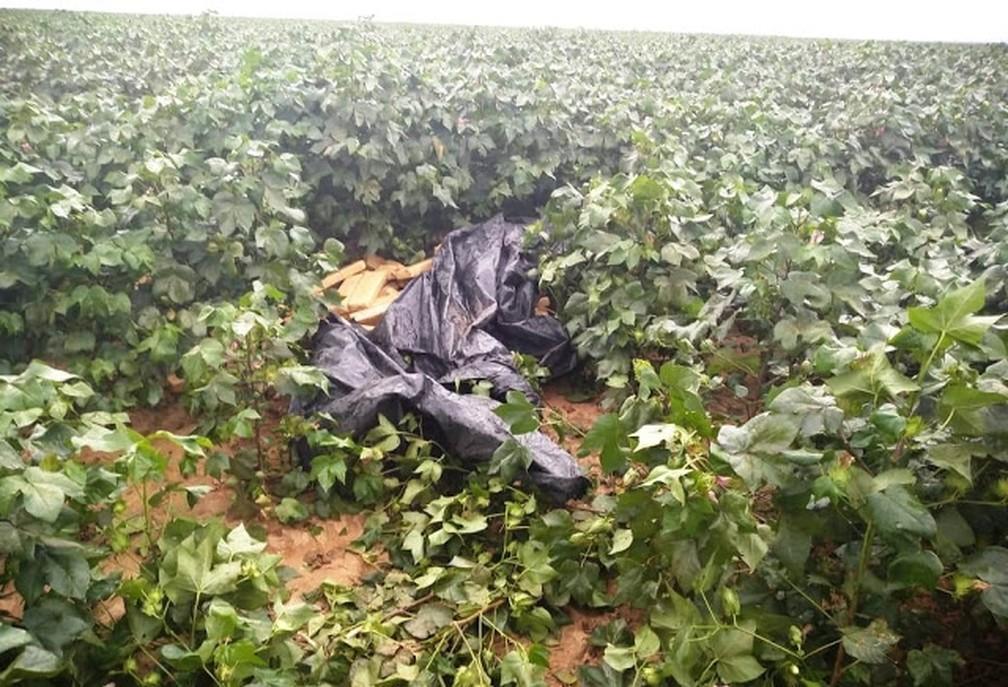 Parte da droga foi achada embaixo de lona preta — Foto: Divulgação/SSP